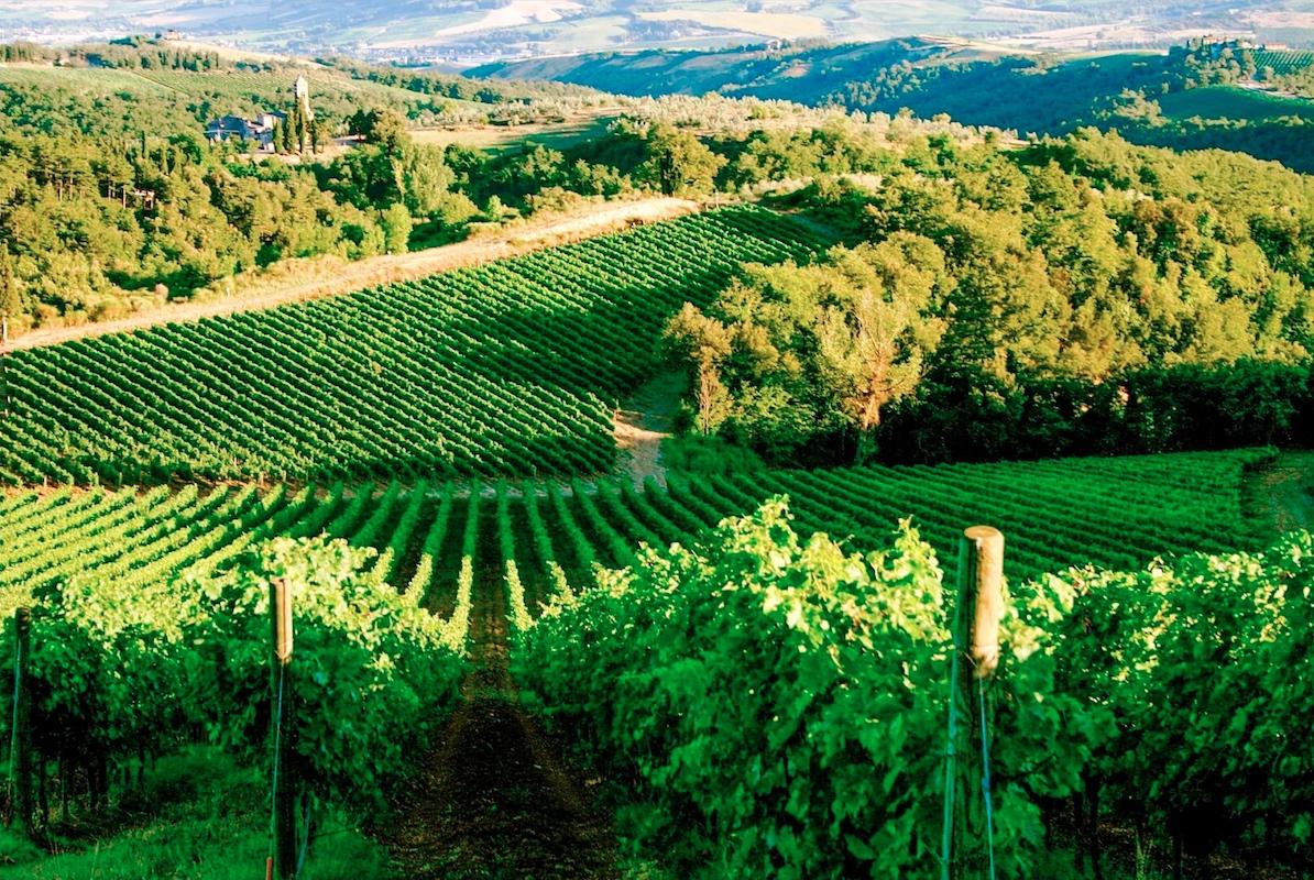 translation wine sector